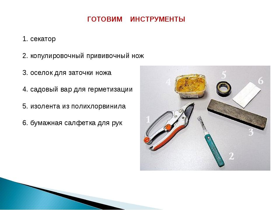 ГОТОВИМ ИНСТРУМЕНТЫ 1. секатор 2. копулировочный прививочный нож 3. оселок д...