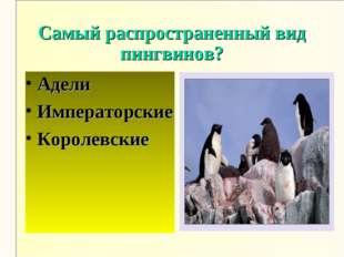 Самый распространенный вид пингвинов? Адели Императорские Королевские