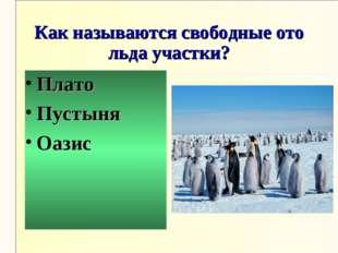 Как называются свободные ото льда участки? Плато Пустыня Оазис
