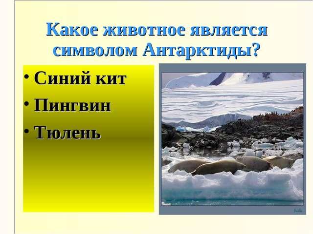 Какое животное является символом Антарктиды? Синий кит Пингвин Тюлень