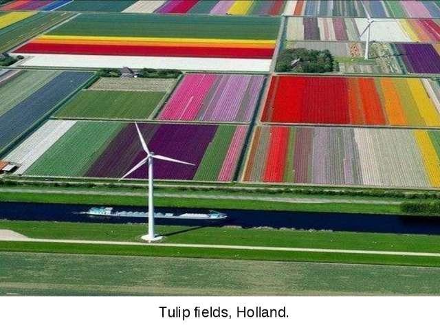 Tulip fields, Holland.