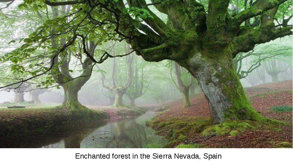 Enchanted forest in the Sierra Nevada, Spain