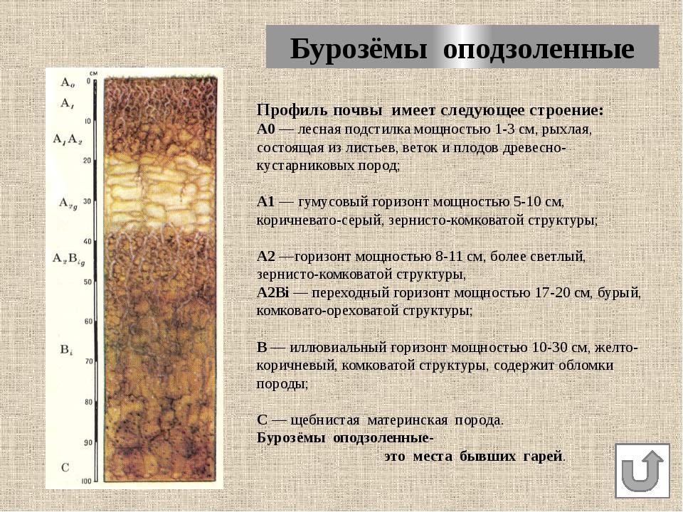 Почвы Пожарского района НАВИГАЦИЯ