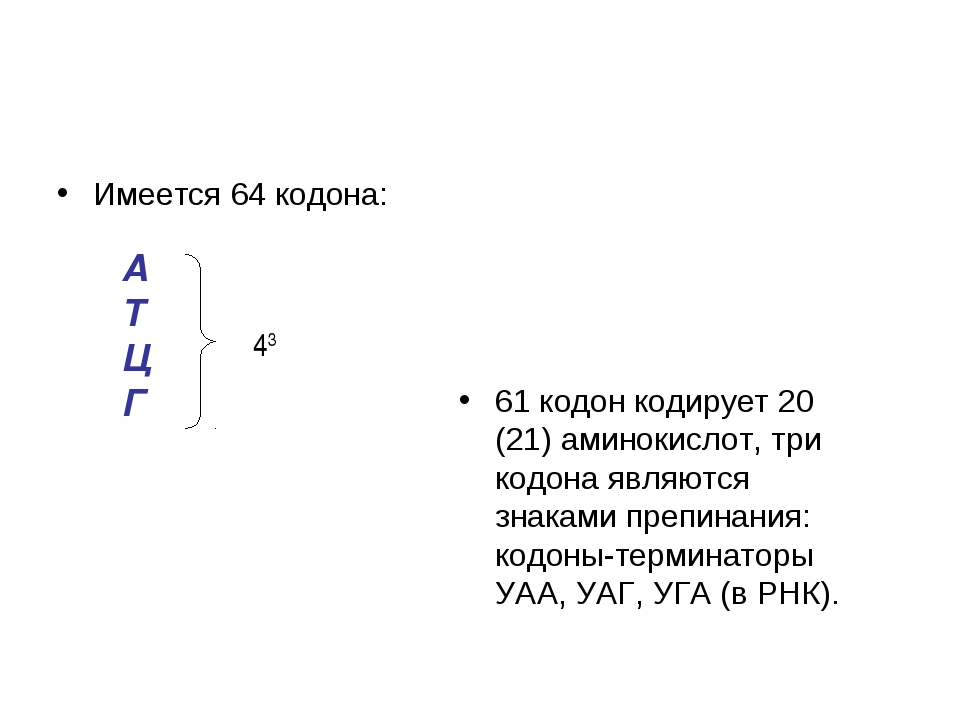 Имеется 64 кодона: 61 кодон кодирует 20 (21) аминокислот, три кодона являются...