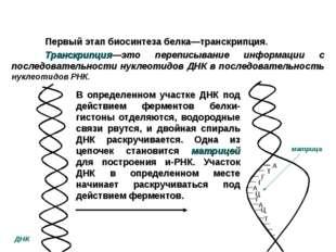 Первый этап биосинтеза белка—транскрипция. Транскрипция—это переписывани