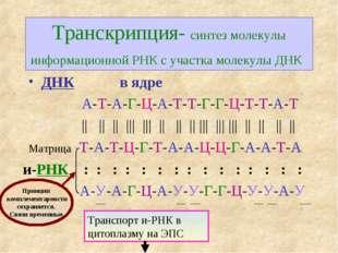 Транскрипция- синтез молекулы информационной РНК с участка молекулы ДНК и-РНК
