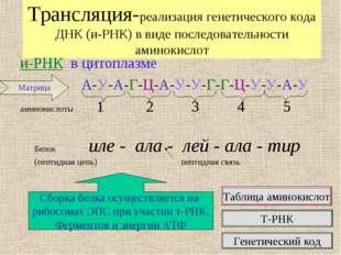 Трансляция-реализация генетического кода ДНК (и-РНК) в виде последовательност