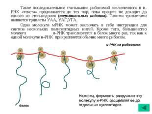 Такое последовательное считывание рибосомой заключенного в и-РНК «текста» п