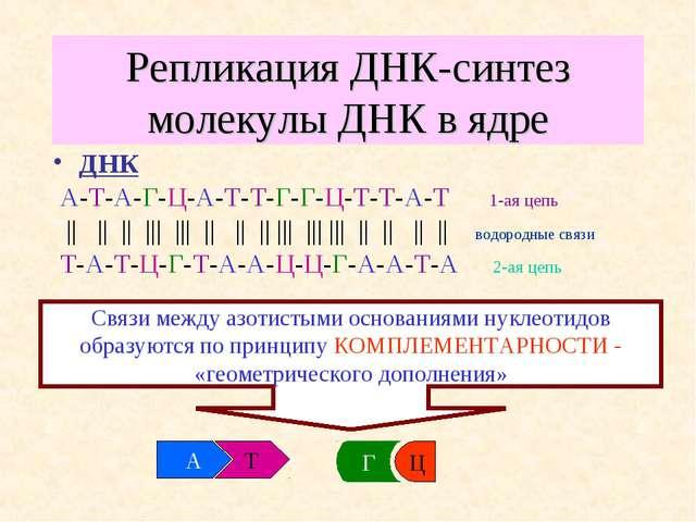 Репликация ДНК-синтез молекулы ДНК в ядре ДНК А-Т-А-Г-Ц-А-Т-Т-Г-Г-Ц-Т-Т-А-Т 1...