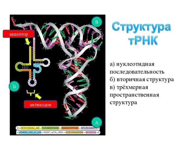 а) нуклеотидная последовательность б) вторичная структура в) трёхмерная прост...