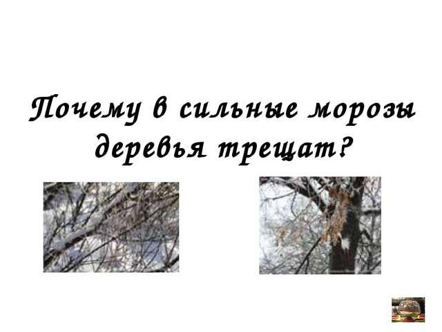 Почему в сильные морозы деревья трещат? Вопрос от учителя физики
