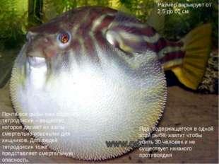 Почти все рыбы-ежи содержат тетродоксин – вещество, которое делает их шипы см
