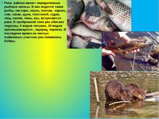 Реки района имеют определенные рыбные запасы. В них водятся такие рыбы, как