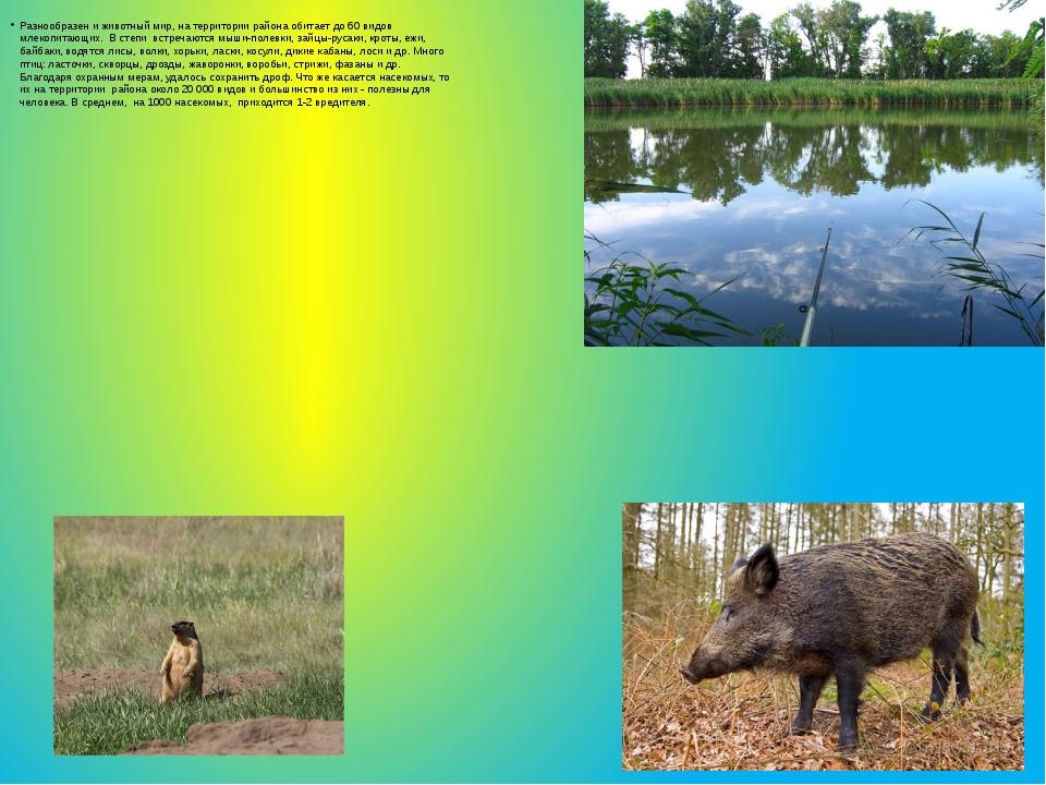 Разнообразен и животный мир, на территории района обитает до 60 видов млекопи...