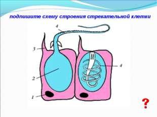 подпишите схему строения стрекательной клетки