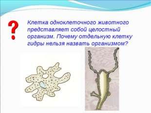 Клетка одноклеточного животного представляет собой целостный организм. Почему