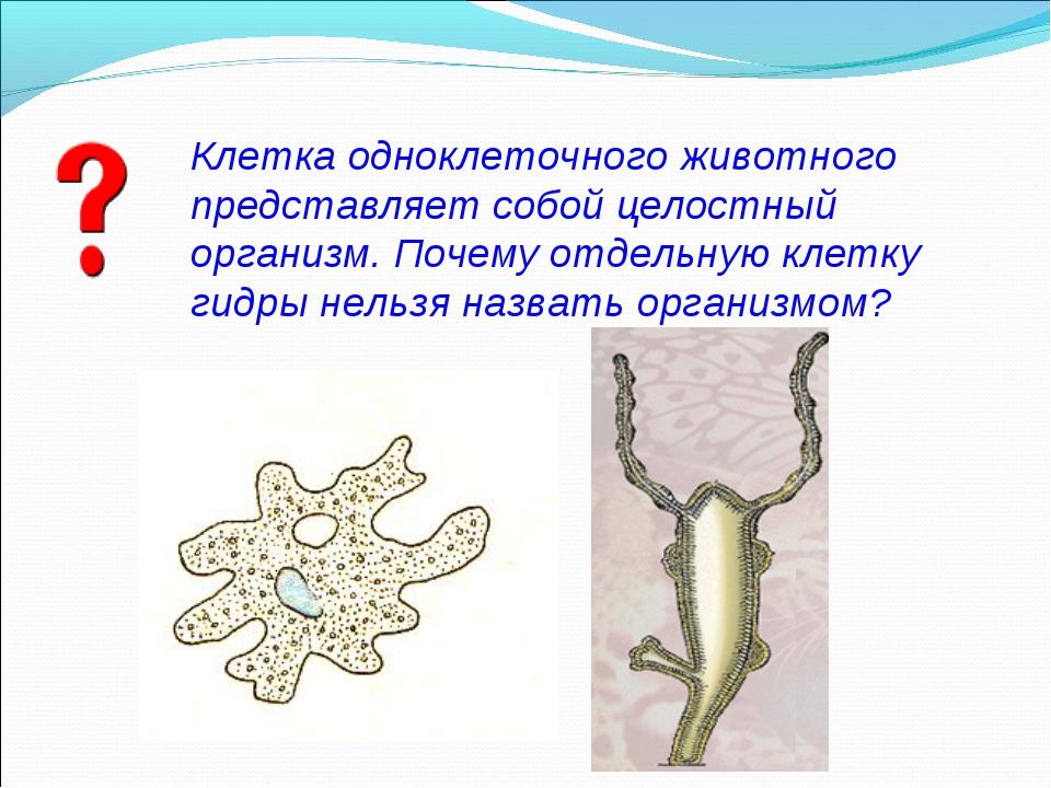 Клетка одноклеточного животного представляет собой целостный организм. Почему...