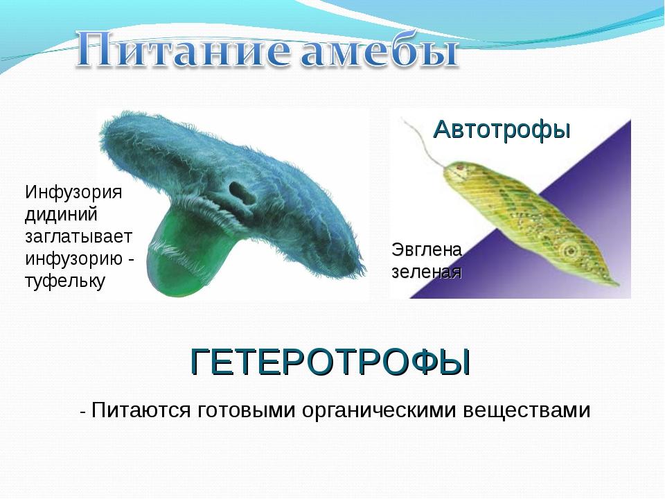 ГЕТЕРОТРОФЫ - Питаются готовыми органическими веществами Инфузория дидиний за...