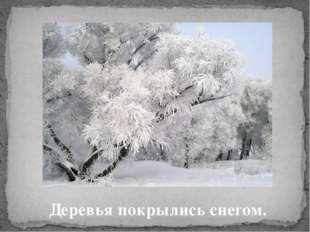 Деревья покрылись снегом.