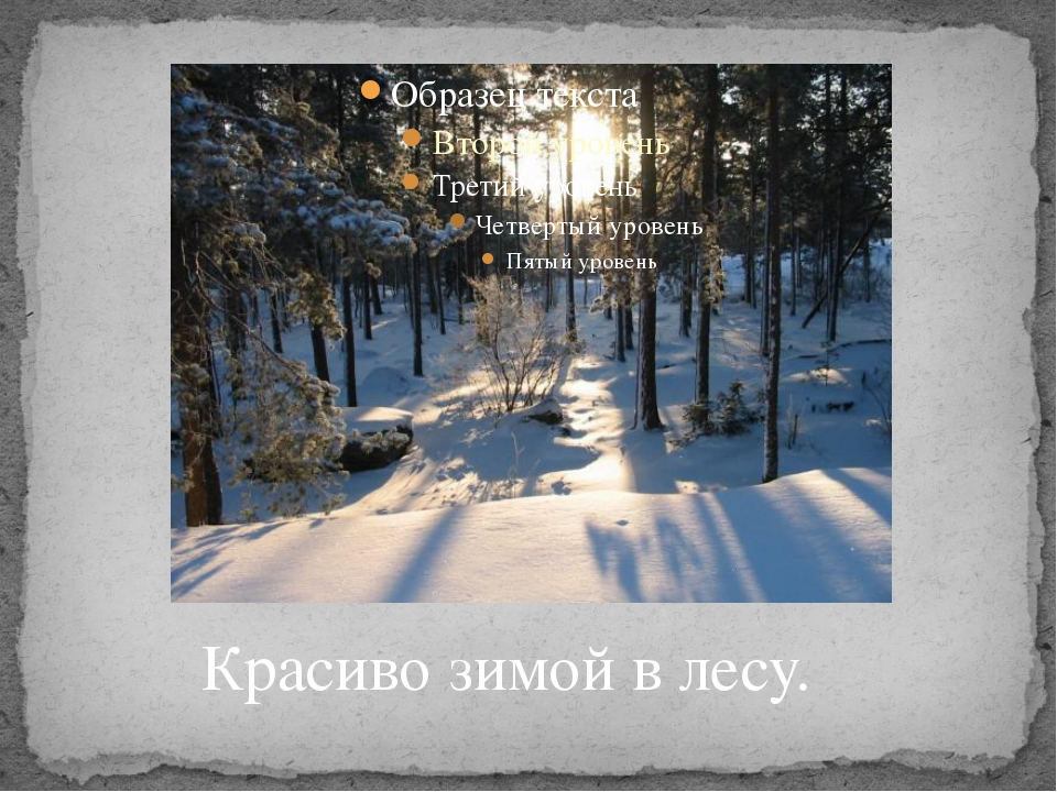 Красиво зимой в лесу.