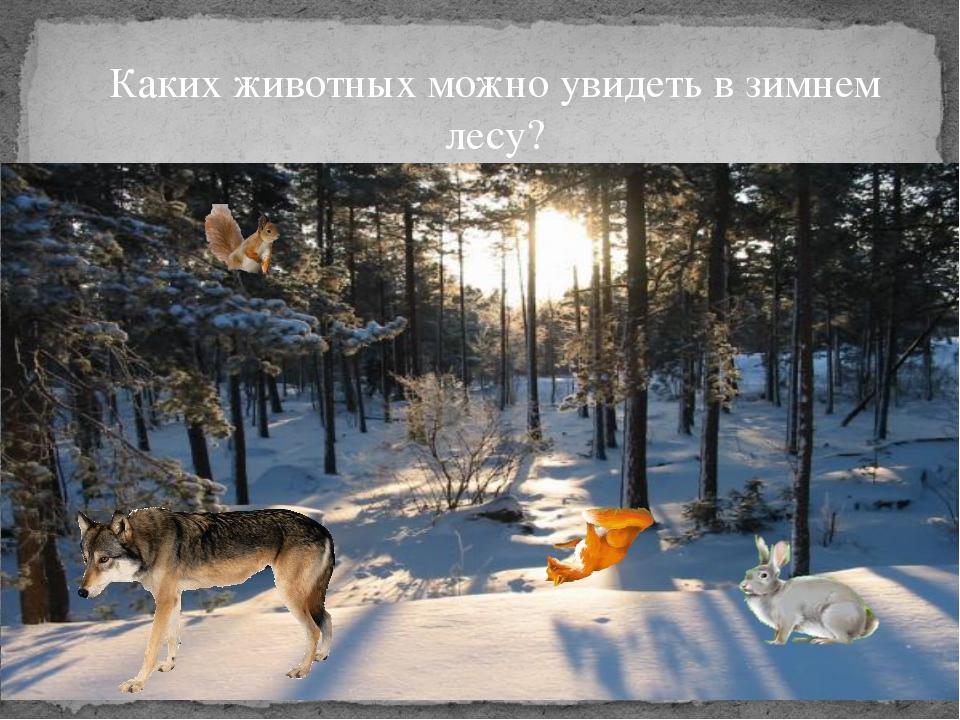 Каких животных можно увидеть в зимнем лесу?