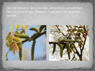 Цветки грецкого ореха мелкие, невзрачные, незаметные. Цветки разнополые. Длин