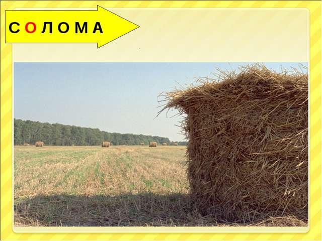 С О Л О М А