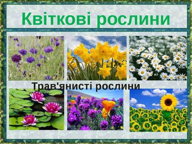 Квіткові рослини Трав'янисті рослини