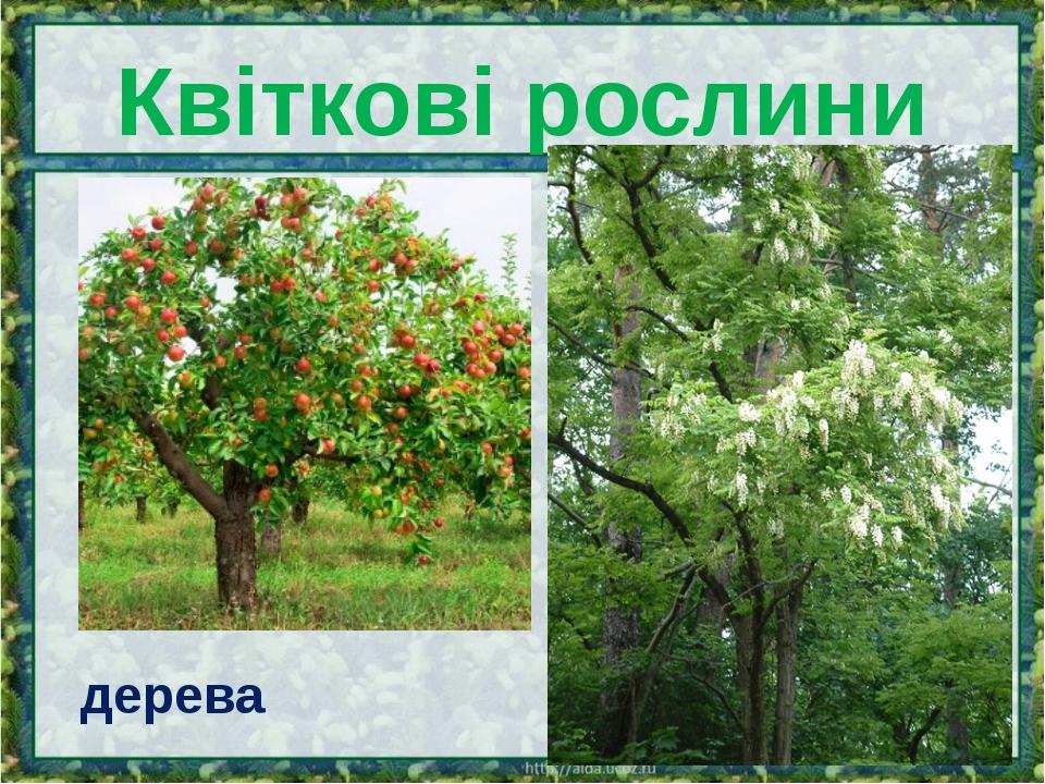 Квіткові рослини дерева