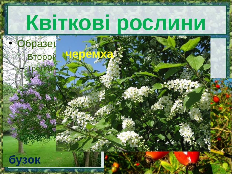 Квіткові рослини бузок шипшина черемха