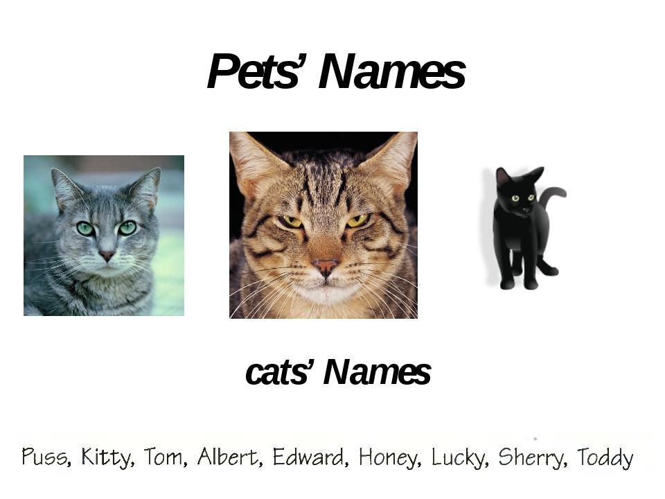 RABBITs' Names