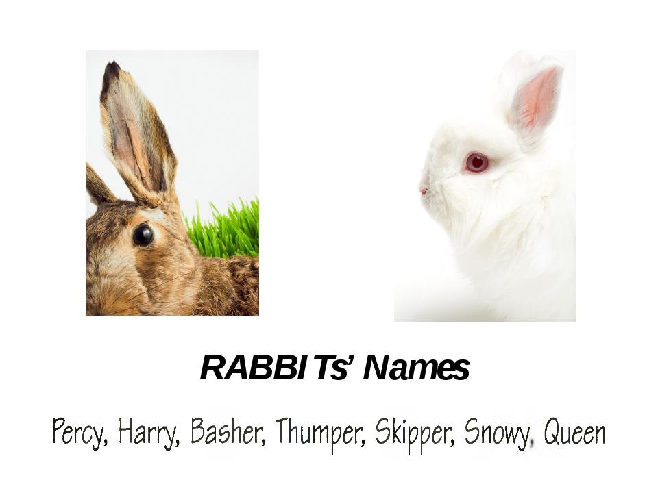 GUINEA-pigs' Names