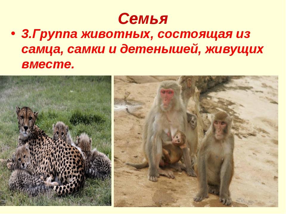 Семья 3.Группа животных, состоящая из самца, самки и детенышей, живущих вместе.