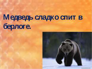 Медведь сладко спит в берлоге.