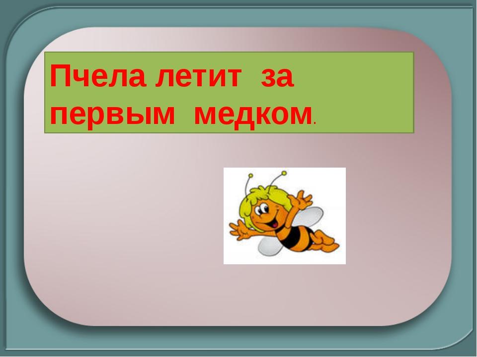 Пчела летит за первым медком.