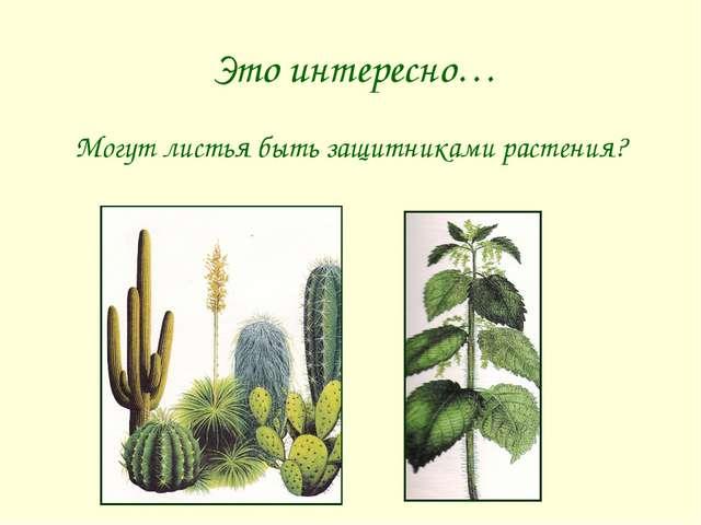 Это интересно… Могут листья быть защитниками растения?