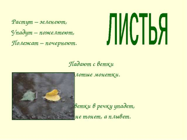 Растут – зеленеют, Упадут – пожелтеют, Полежат – почернеют. Падают с ветки Зо...