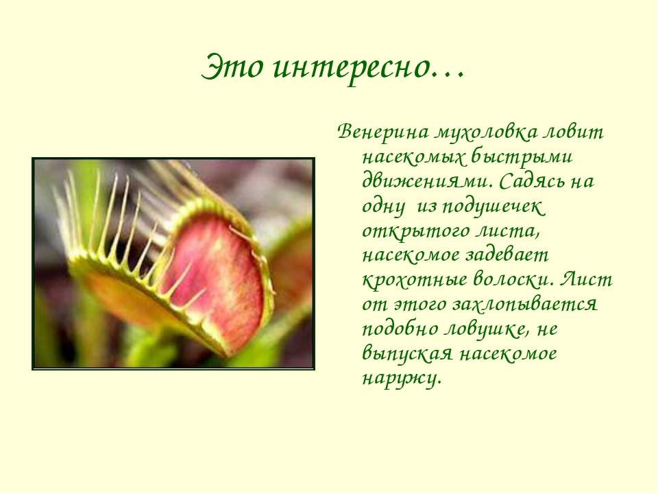 Это интересно… Венерина мухоловка ловит насекомых быстрыми движениями. Садяс...