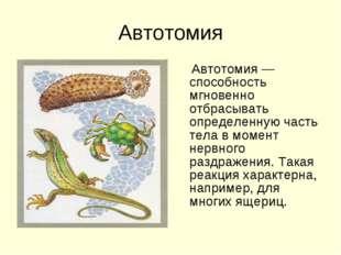 Автотомия Автотомия — способность мгновенно отбрасывать определенную часть те