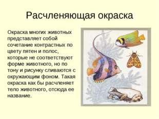 Расчленяющая окраска Окраска многих животных представляет собой сочетание кон