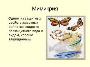 Мимикрия Одним из защитных свойств животных является сходство беззащитного ви