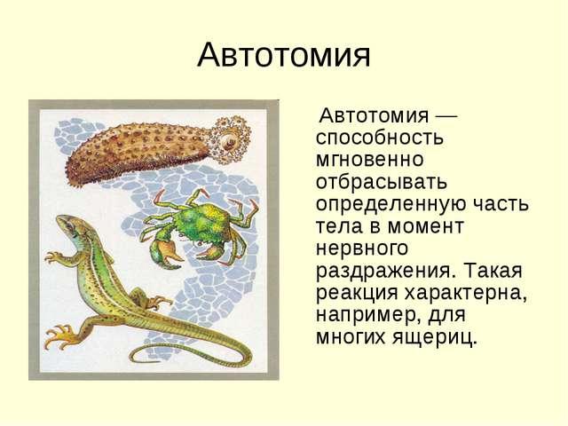 Автотомия Автотомия — способность мгновенно отбрасывать определенную часть те...