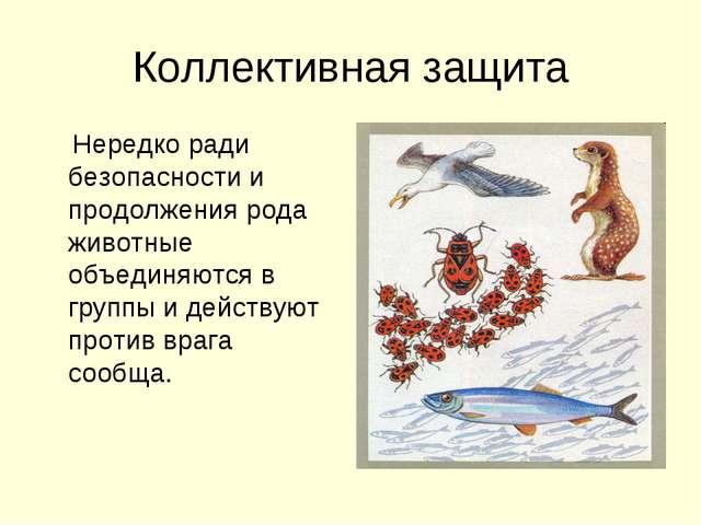 Коллективная защита Нередко ради безопасности и продолжения рода животные объ...
