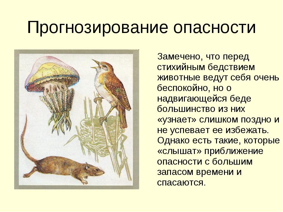 Прогнозирование опасности Замечено, что перед стихийным бедствием животные ве...