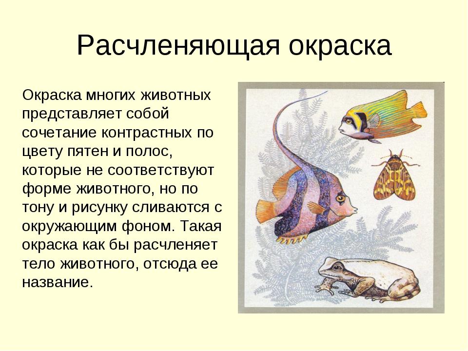 Расчленяющая окраска Окраска многих животных представляет собой сочетание кон...
