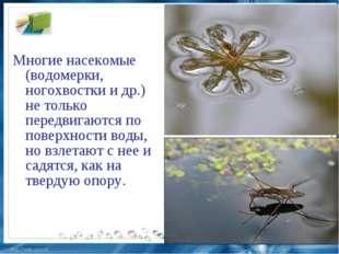 Многие насекомые (водомерки, ногохвостки и др.) не только передвигаются по по