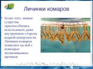 Личинки комаров Более того, живые существа приспособились использовать даже в