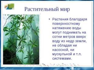Растительный мир Растения благодаря поверхностному натяжению воды могут подни