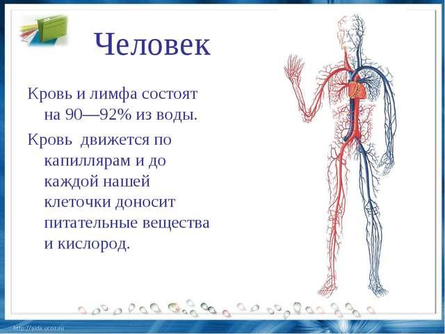Человек Кровь и лимфа состоят на 90—92% из воды. Кровь движется по капилляр...
