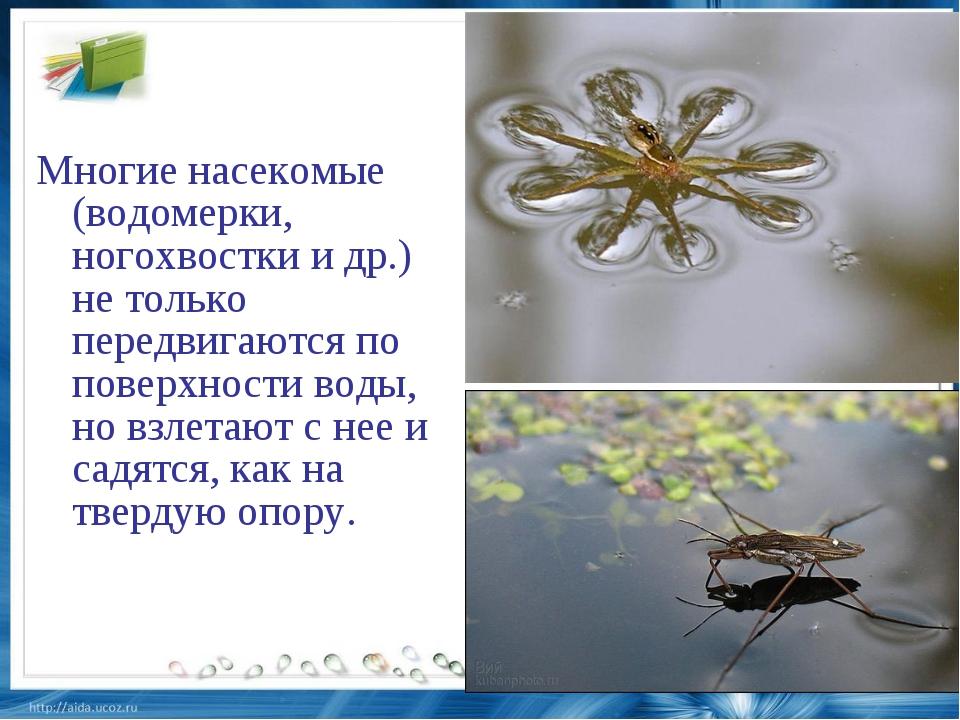 Многие насекомые (водомерки, ногохвостки и др.) не только передвигаются по по...